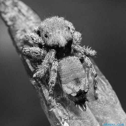 如果你觉得蜘蛛一点儿也不可爱
