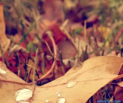 秋分过后寒露即将来临