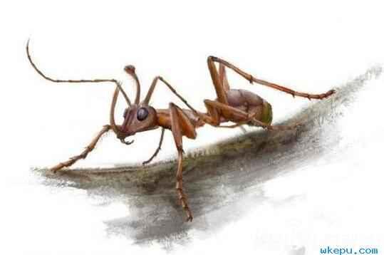 青蛙体内发现新种蚂蚁!科