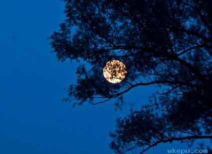 露从今夜白,月是故乡明