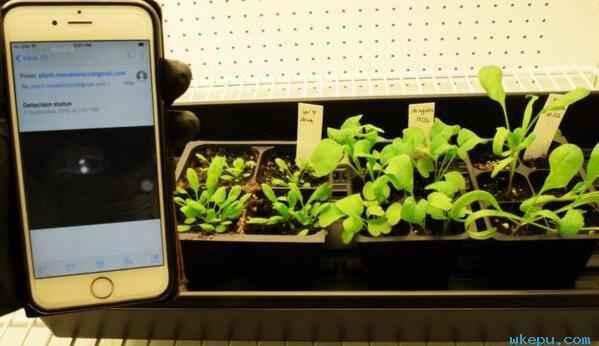 仿生植物可以探测爆炸物