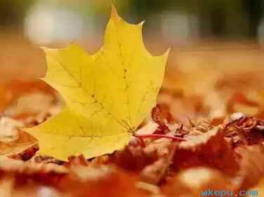落叶要多久能变成土壤