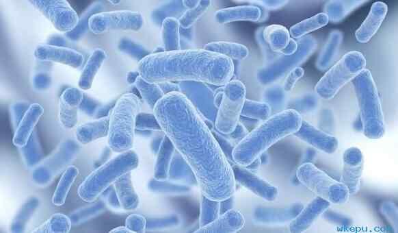 益生菌如何为人类健康保驾护航?