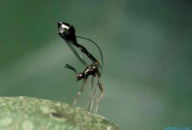 听榕树榕小蜂故事,谈生态科学之生死