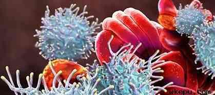 血液系统恶性肿瘤不良事件的现代化评估