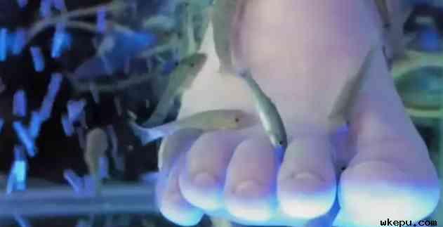 JAMA皮肤病学杂志上发表的一篇报道称,六个月前,这名女子将她的脚浸入一桶装满小鱼的水中,小鱼会吃掉脚上的死皮。后来,她注意到,脚趾甲开始与她的脚趾分开,她的指甲出现疾病情况并脱落。   英国环境渔业和水产养殖科学中心高级微生物学家戴维说,罪魁祸首可能是一种链球菌,这种菌株常常存在于鱼类当中。   威尔康奈尔医学皮肤病学助理教授兼指甲部门主任利普纳博士说,脚趾甲通常每月生长约1毫米,因此,这名女子的指甲可能需要长达一年才能完全恢复。    英国公共卫生部感染和人畜共患病小组资深科学家阿曼达·沃尔什说,鱼类修脚会导致细菌、病毒通过水体、鱼缸、小鱼在不同人的脚部相互传播。某些皮肤病、脚或腿上有伤口会增加感染风险。