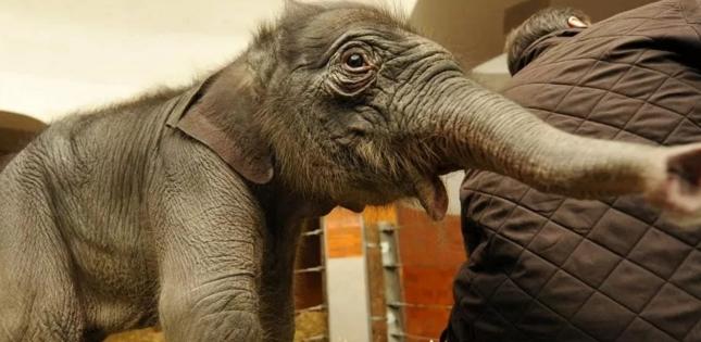 最新研究发现大象p53基因具有抗癌作用