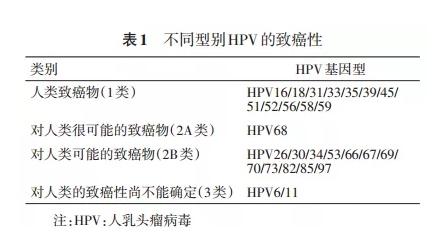 HPV是什么?如何消灭HPV?
