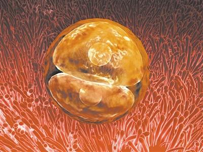 人类胚胎早期发育的黑匣子正在缓缓打开?